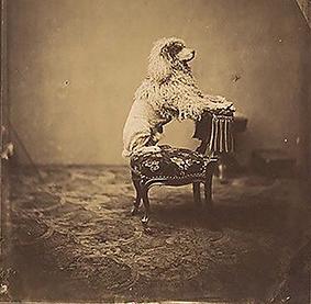 1 Barboncino Imperatrice Eugenia A.A. Disdéri 1850