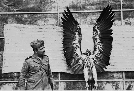 6 La cattura del rapace F. Patellani Eritrea 1935