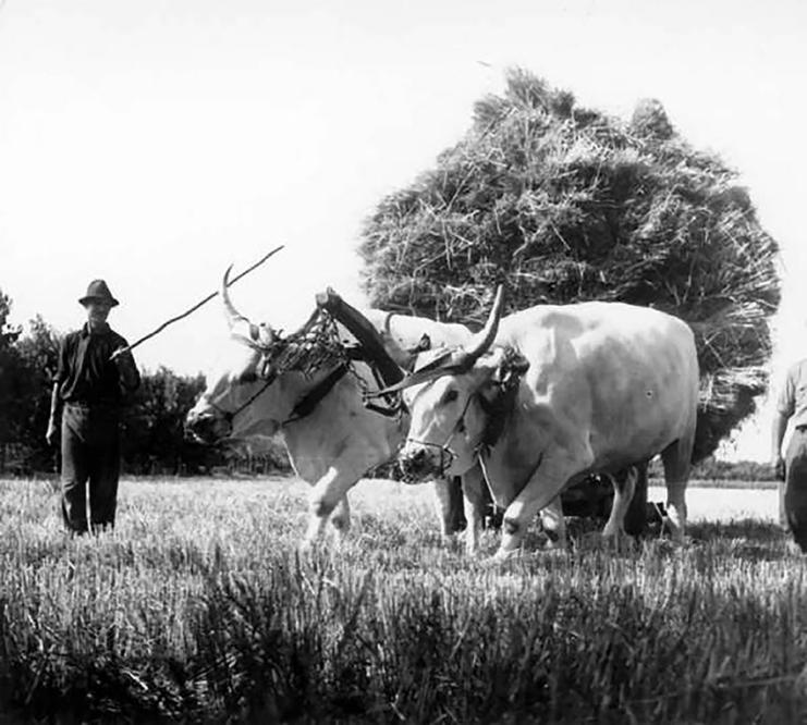 7 La battaglia del grano Fazioli Ernesto1935