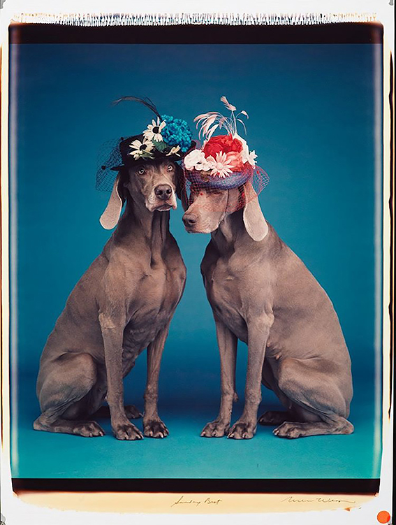 12 William Wegman